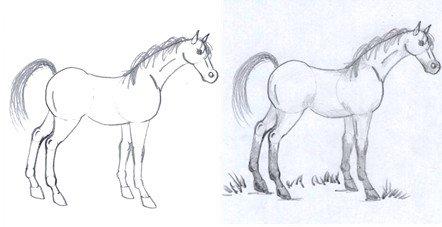 horse drawing step nine