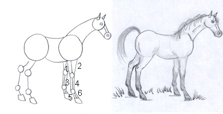 horse drawing step seven