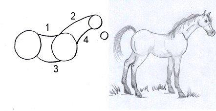 horse drawing step three