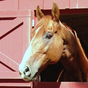 EquineSpot Blog