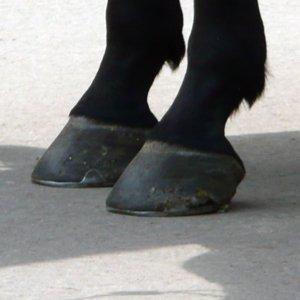 Black or Blue hoof