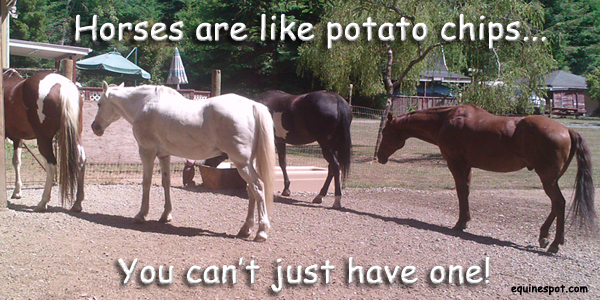 Horses are like potato chips, you can't just have one!