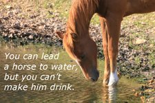 You can lead a horse to water...