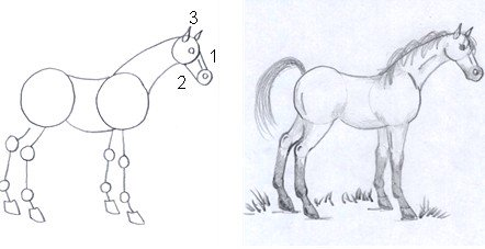 horse drawing step six