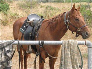 Horse fact: equines can stand virtually effortlessly.