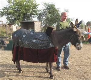 Boris the donkey dons his wizard cape and hat just in time for Halloween!
