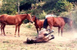 Are your horses ready for the rigors of a camp trip?