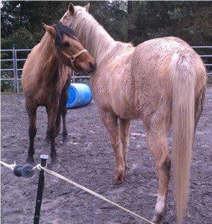 Horses bond with nuzzling and soft bites