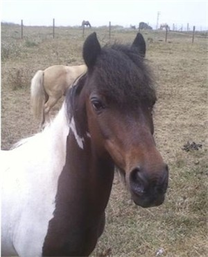 How much does a pony cost?