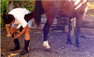 Pick hoofs before and after a ride