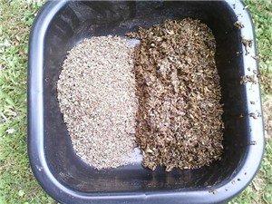 Dry beet pulp will not kill a horse.