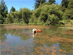 Horses enjoy a good swim!