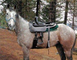 Western side saddle
