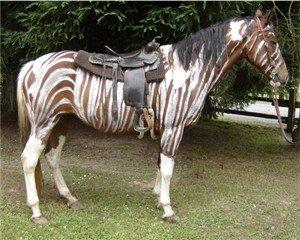 Zebra Horse Halloween